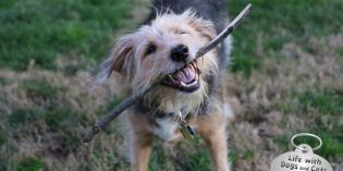 Haiku by Dog: Stick