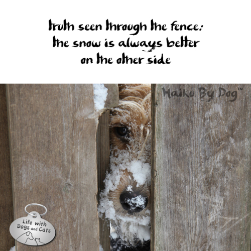 Haiku by Dog: truth seen through fence: / the snow is always better / on the other side