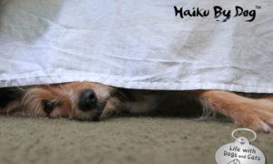 Haiku by Dog: Done