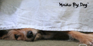 Haiku by Dog: Done