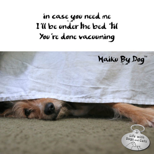 in case you need me / I'll be under the bed 'til / you're done vacuuming #HaikuByDog