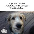 Haiku by Dog: if you need some help / taste testing that hamburger / I would volunteer.