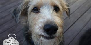 Haiku by Dog: Volunteer