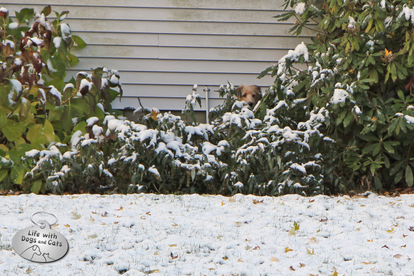 Tucker is hiding in the bushes, ready to pounce.