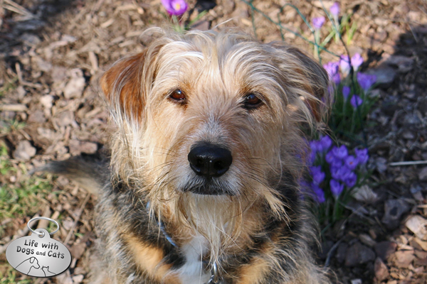 Tucker is a terrier just like Rosie. Though at 5 years old, he's already outlived her.