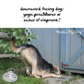 Haiku by Dog: downward facing dog: yoga practitioner or / seeker of chipmunk?