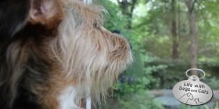 Haiku by Dog: Testament