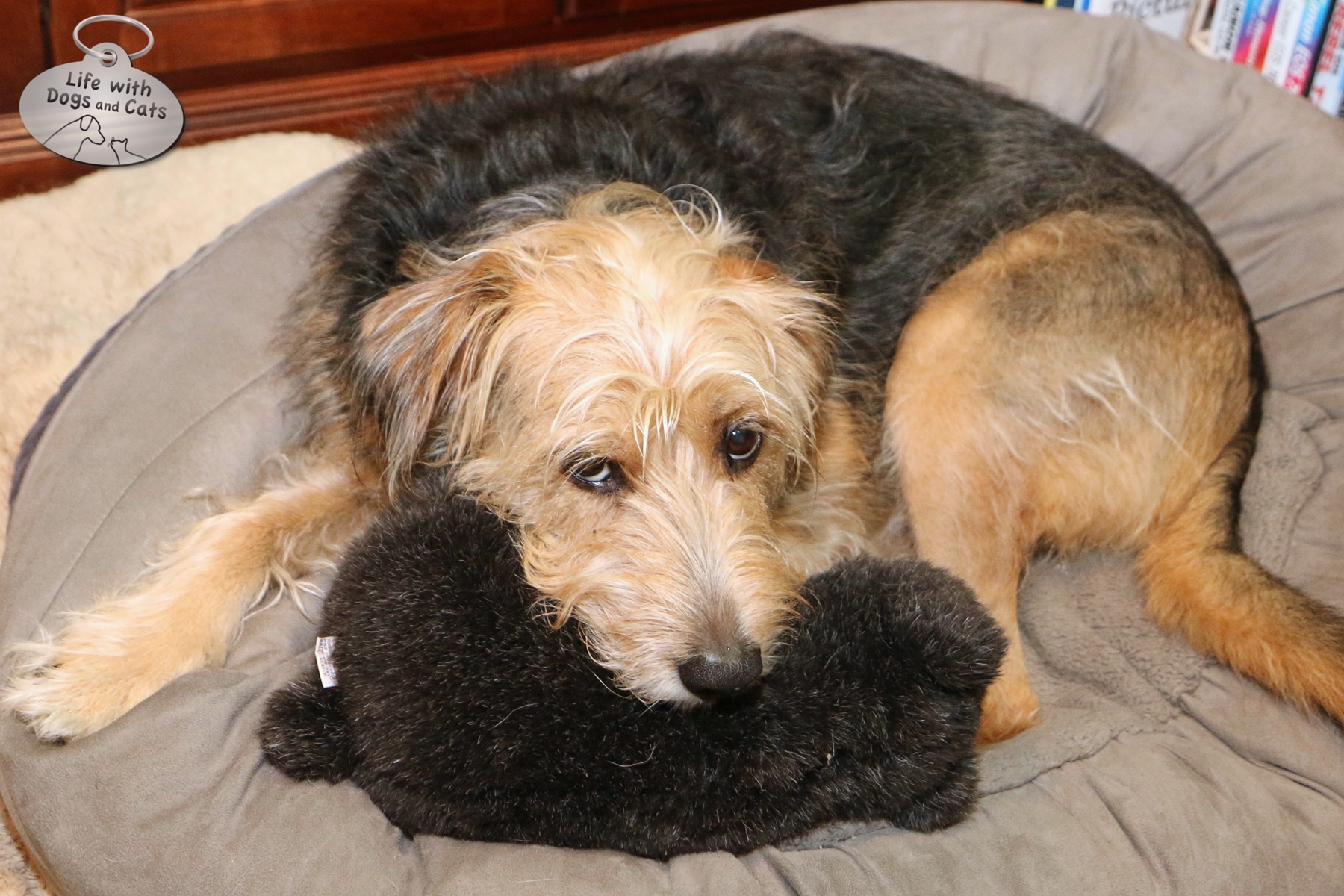 A huggable, adorable Tucker in my office, along with the current stuffed animal of choice.