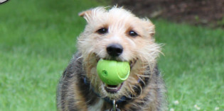 Photo: Floating on air; a dog and his ball