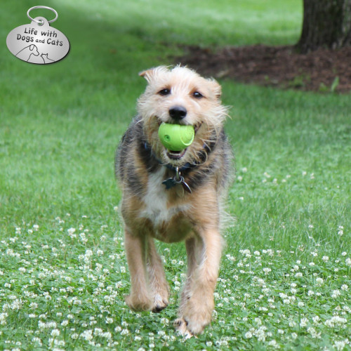 14 Things to Do on National Dog Day: 14) Have a ball!