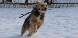 A Dog's Joy: Snow, a Stick, and Room to Run