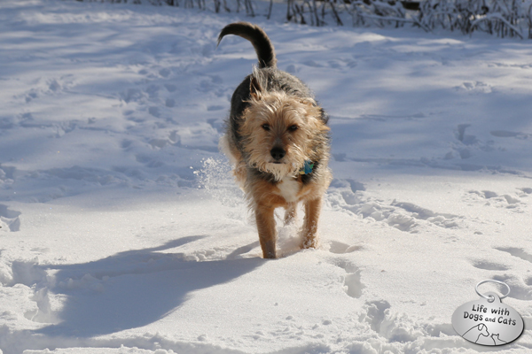 Tucker running in snow