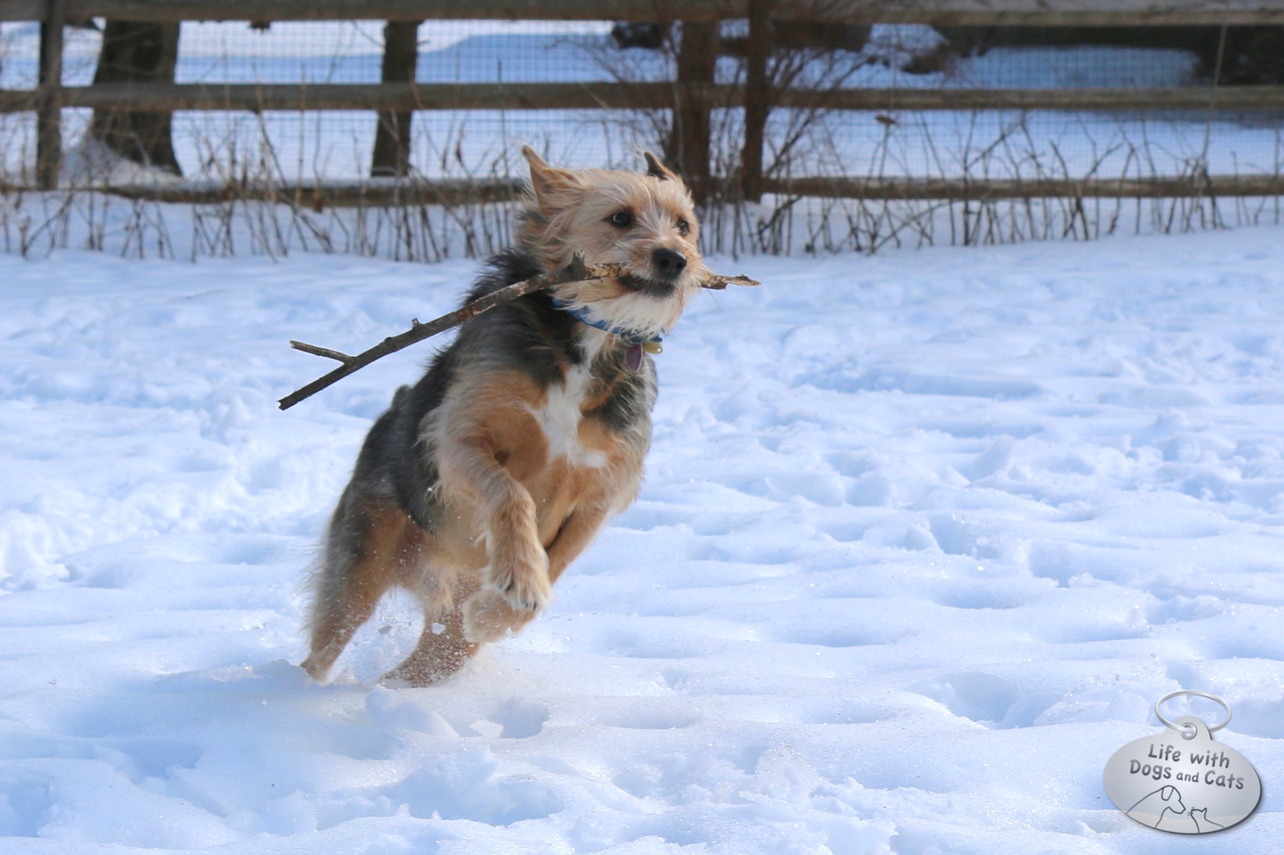 Sticks are fun to play fetch with in the snow; they land on top instead of sinking down like balls.