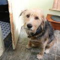 """Tucker is proud he was able to get into the bathroom and eat """"treats"""" from the cats' litter box, even if he destroyed the door in the process."""