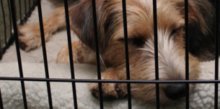 Crate Expectations: Why a Crate is Essential for Your Pet #CrateHappyPets