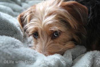 Tucker the dog's cute face