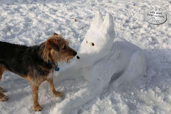 Tucker inspects the snow dog.