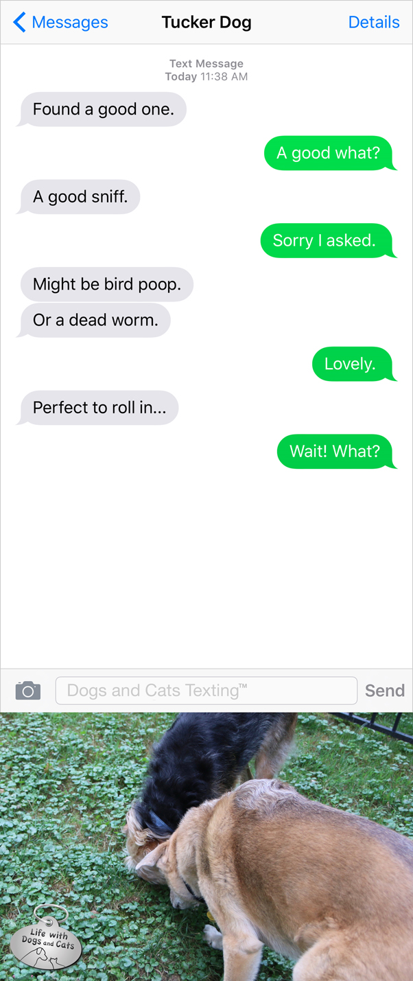 Text from Dog: Found a good sniff. Might be dead worm. Perfect to roll in.