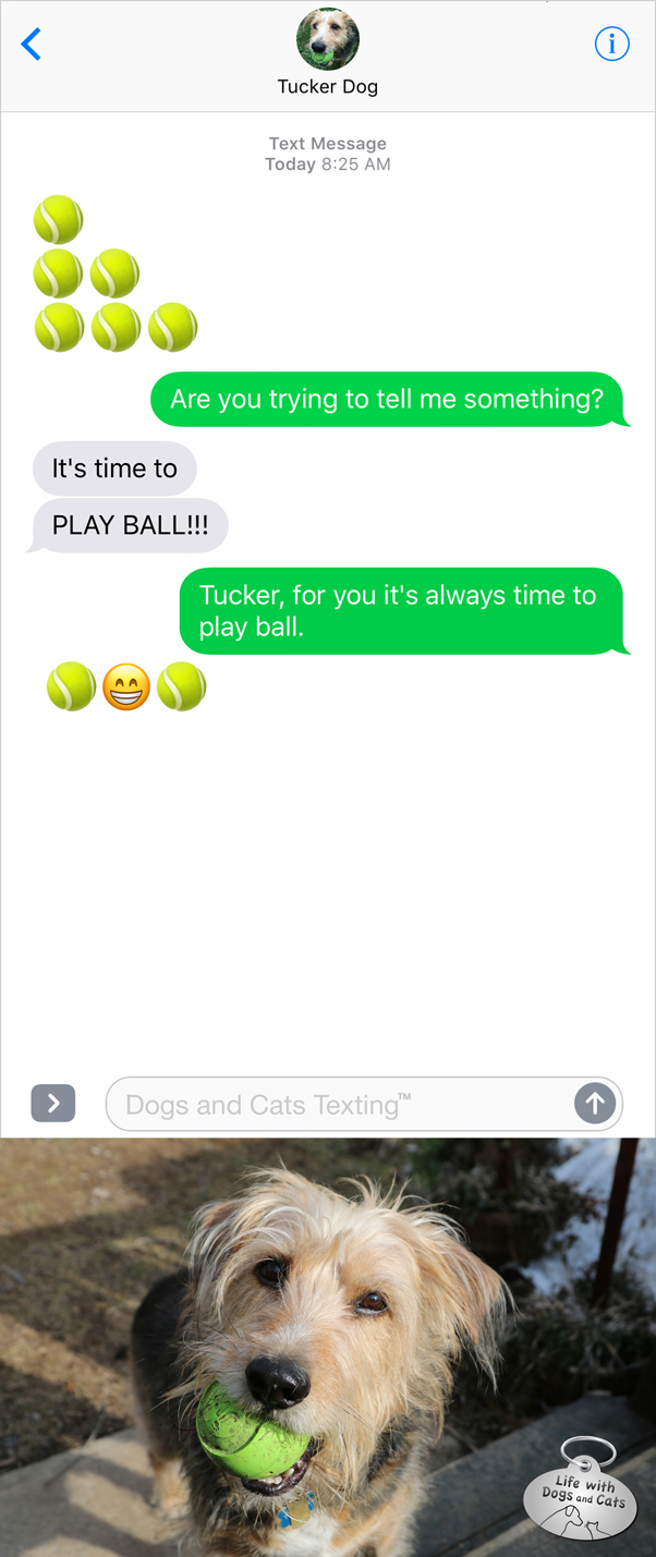 Text from Dog: BALL! BALL! BALL! Me: Are you trying to tell me something?