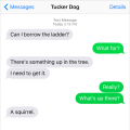 Text from Dog: I need a ladder. Something's up in a tree. Me: Really? What? Dog: A squirrel