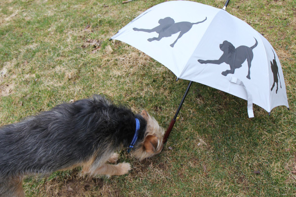 Tucker inspects the umbrella handle.