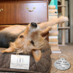 Good, Bedder, Best: My Dogs Test Out a Brentwood Home Pet Bed (and you can enter to win one)