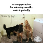 Haiku by Dog: Welcoming