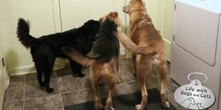 Haiku by Dog: Welcoming