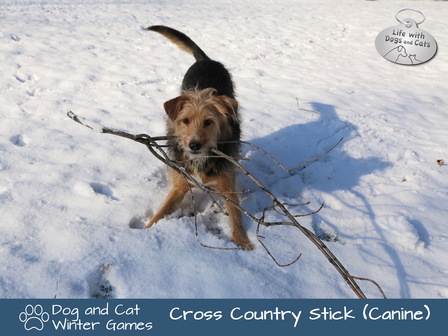 Dog and Cat Winter Games: Cross Country Stick