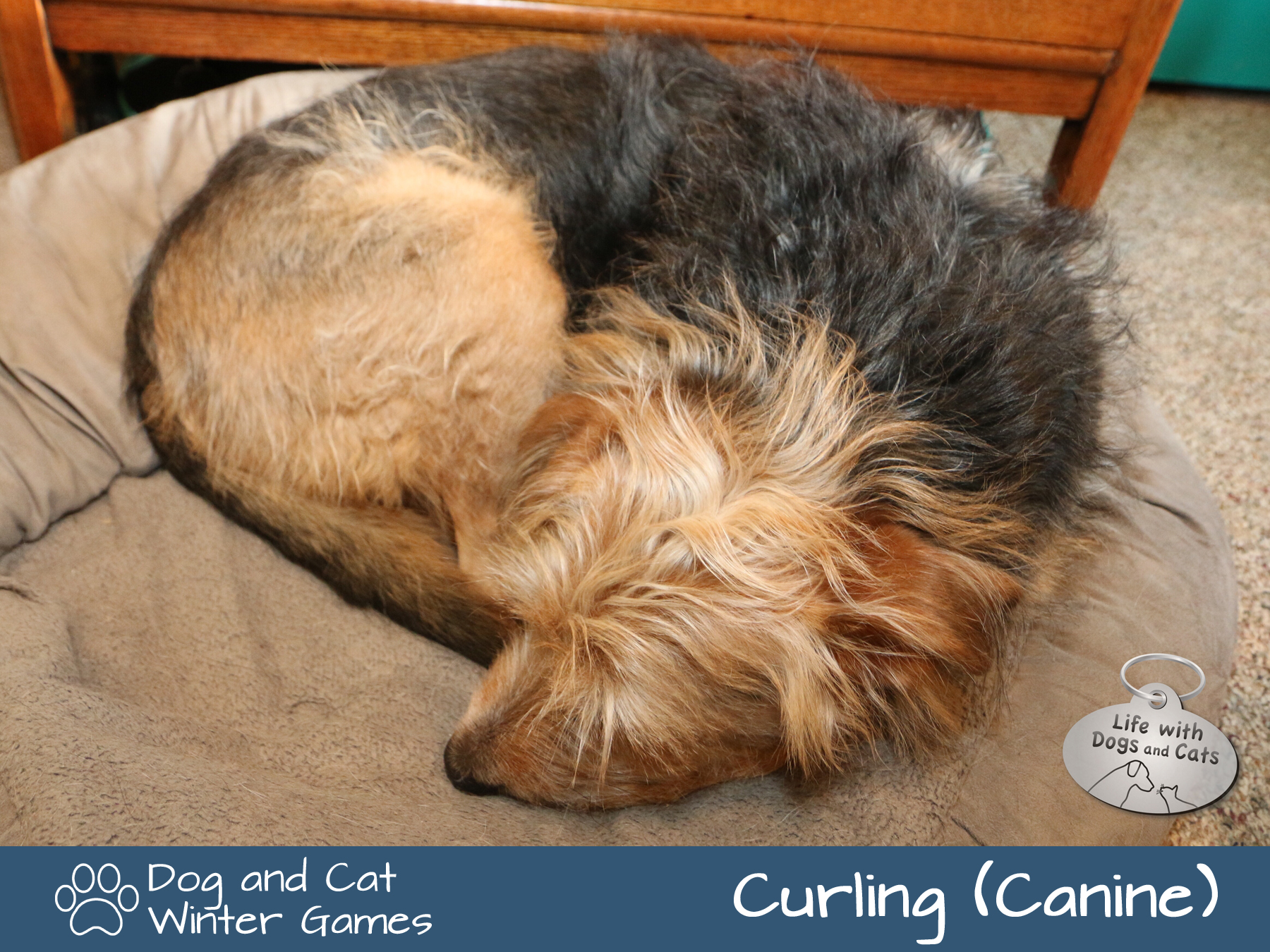 Dog and Cat Winter Games: Curling (Canine)