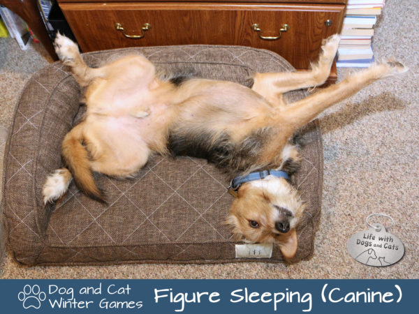 Dog and Cat Winter Games: Figure Sleeping