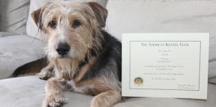 Tucker, Certified