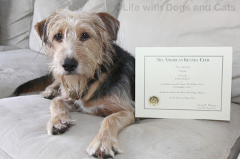Tucker dog posing with Canine Good Citizen certificate.