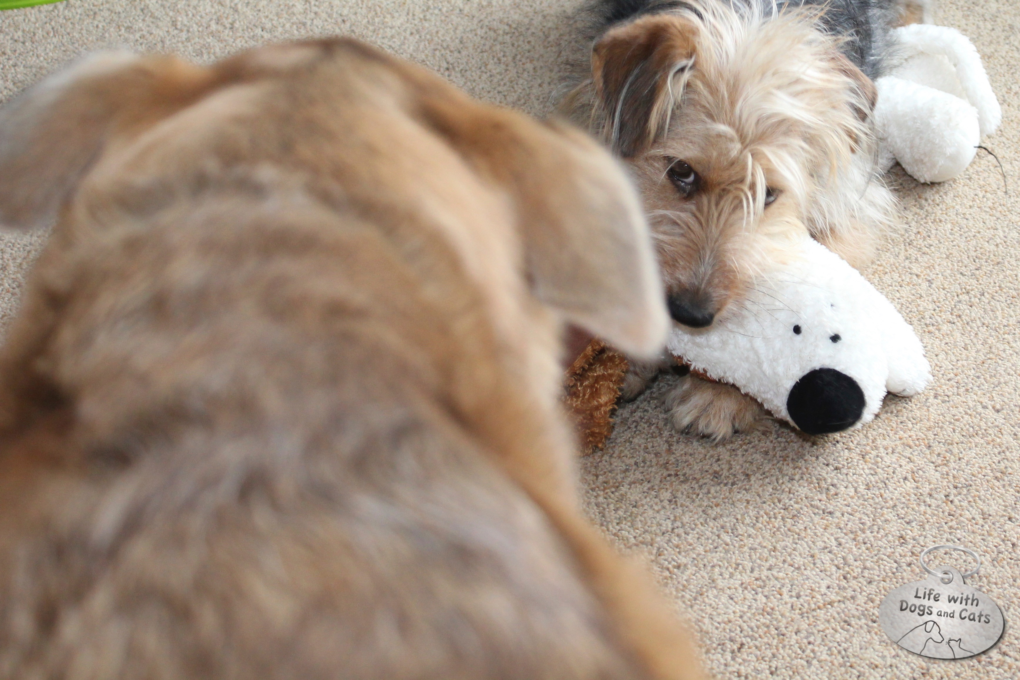 Tucker nearly always won when ownership of plush toys was debated.