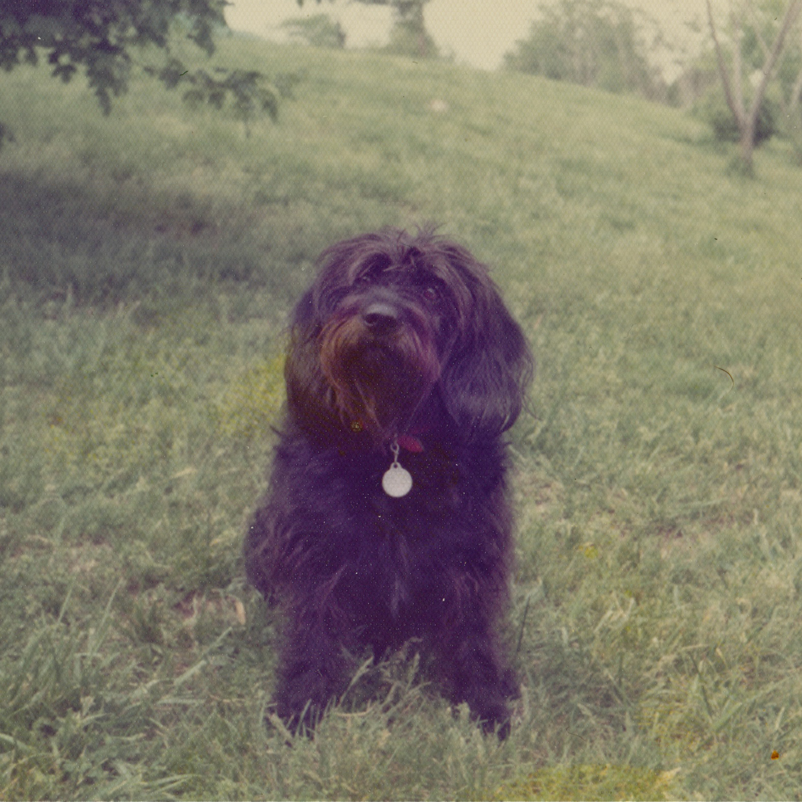 Dogs of yesterday from Life with Dogs and Cats: Twinkle (1969-1980)