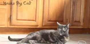 Haiku by Cat: Walk