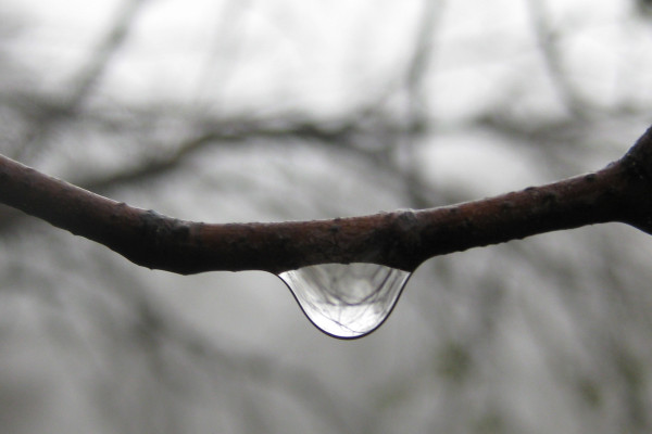 Water droplet curved stem fog