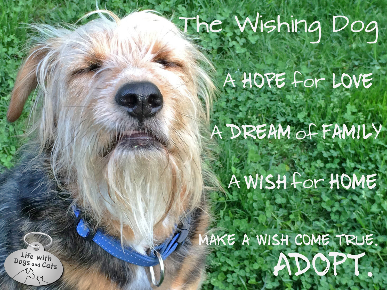 Make a wish come true. Adopt.