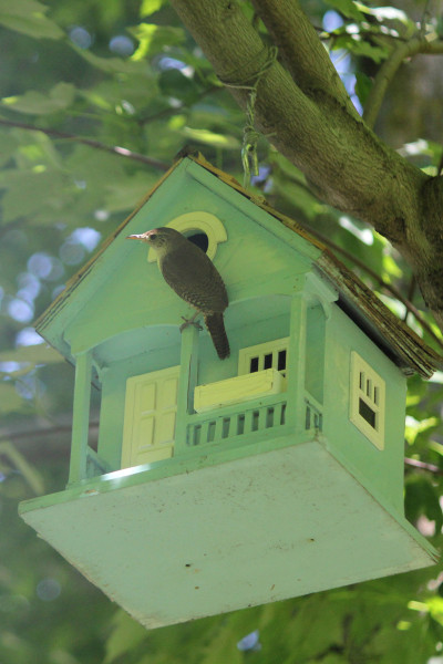 Wren on a birdhouse