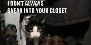 I Don't Always Sneak Into Your Closet #MostInterestingCatInTheWorld