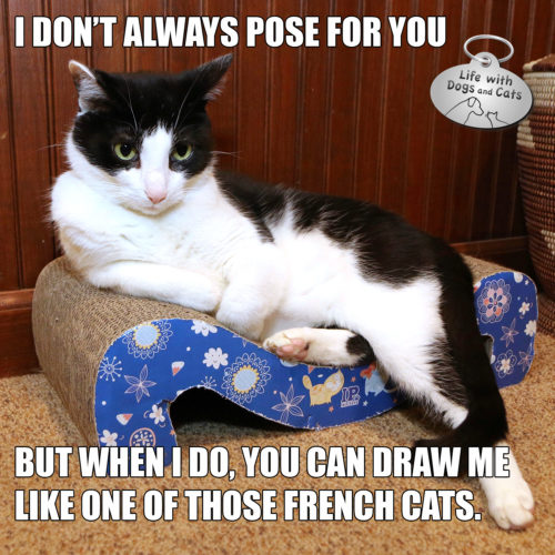 I don't always pose for you, but when I do, you can draw me like one of those french cats. #MostInterestingCatInTheWorld