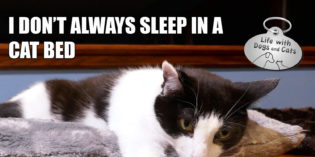 I Don't Always Sleep in a Cat Bed #MostInterestingCatInTheWorld