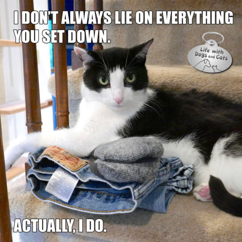 I don't always lie on everything you put down, actually, yes I do. #MostInterestingCatInTheWorld #StayComfy, my friends.