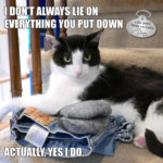 I Don't Always Lie on Everything You Set Down #MostInterestingCatInTheWorld