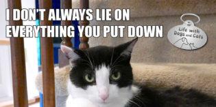 I Don't Always Lie on Everything You Set Down #MostInterestingCatInTheWorld