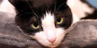 I Don't Always Sleep on a Cat Bed #MostInterestingCatInTheWorld