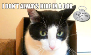 I Don't Always Hide in a Box #MostInterestingCatInTheWorld