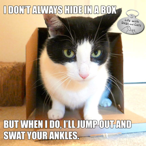I don't always hide in a box. But when I do, I'll jump out and swat your ankles. #MostInterestingCatInTheWorld #StayComfy, my friends