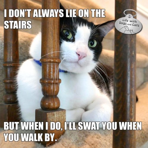 I don't always lie on the stairs. But the I do, I'll swat you when you walk by. #MostInterestingCatInTheWorld #StayComfy, my friends