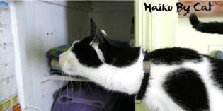 Haiku by Cat: Mistake